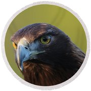 Round Beach Towel featuring the photograph Golden Eagle 5151802 by Rick Veldman