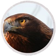 Round Beach Towel featuring the photograph Golden Eagle 5151803 by Rick Veldman