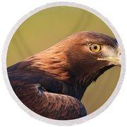 Round Beach Towel featuring the photograph Golden Eagle 5151806 by Rick Veldman