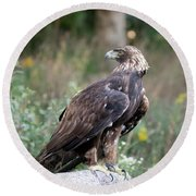 Round Beach Towel featuring the photograph Golden Eagle On Rock 92515 by Rick Veldman
