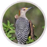Golden-fronted Woodpecker Round Beach Towel