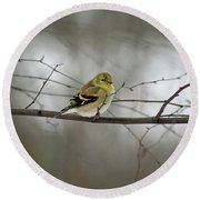 Goldfinch In Winter Looking At You Round Beach Towel