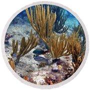 Gorgonian Parrotfish Round Beach Towel