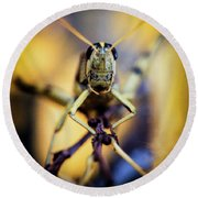 Round Beach Towel featuring the photograph Grasshopper by Jon Burch Photography