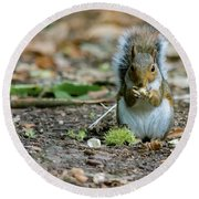 Round Beach Towel featuring the photograph Gray Squirrel Stood Upright Eating A Nut by Scott Lyons