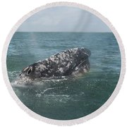 Gray Whale In Bahia Magdalena Round Beach Towel