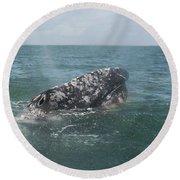 Gray Whale In Bahia Magdalena Round Beach Towel