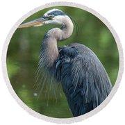 Great Blue Heron After Preening Dmsb0157 Round Beach Towel