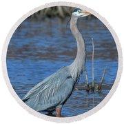 Great Blue Heron Dmsb0150 Round Beach Towel