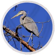 Great Blue Heron Strikes A Pose Round Beach Towel