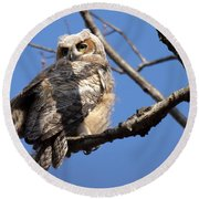 Round Beach Towel featuring the photograph Great Horned Owlet 42915 by Rick Veldman