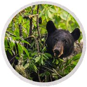 Great Smoky Mountains Bear - Black Bear Round Beach Towel