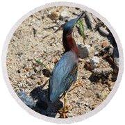 Green Heron Strut Round Beach Towel