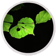 Green Leaves Round Beach Towel