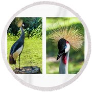 Grey Crowned Crane Gulf Shores Al Collage 8 Diptych Round Beach Towel