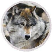 Grey Wolf Round Beach Towel