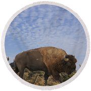 Group Of Bison Walking Against Rocky Mountains  Round Beach Towel