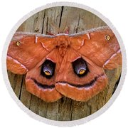 Round Beach Towel featuring the photograph Halloween Moth by Vincent Autenrieb
