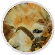 Happy Alpaca Round Beach Towel