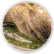 Head Dunking Duck Toned Round Beach Towel