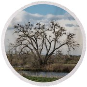 Round Beach Towel featuring the photograph Heronry by Jon Burch Photography