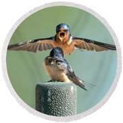 Hey, Babe, Let's Rock N Roll.  Barn Swallows Round Beach Towel