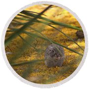 Hidden Rabbit Among Golden Palo Brea Flowers Round Beach Towel