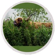 Round Beach Towel featuring the photograph Highland Cow In Tall Grass by Scott Lyons