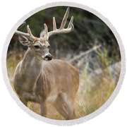 Hill Country Whitetail Round Beach Towel