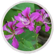 Round Beach Towel featuring the photograph Hong Kong Orchid Tree Dthn0262 by Gerry Gantt