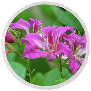 Round Beach Towel featuring the photograph Hong Kong Orchid Tree Dthn0263 by Gerry Gantt