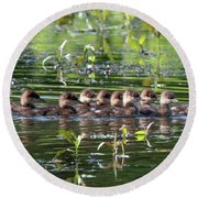 Hooded Merganser Ducklings Dwf0203 Round Beach Towel