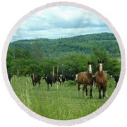 Horse And Cow Round Beach Towel