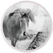 Horse In Infrared Round Beach Towel