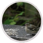 Round Beach Towel featuring the photograph House Sparrow Next To Seed On Bench by Scott Lyons