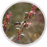 Hummingbird Flying To Red Yucca 1 In 3 Round Beach Towel