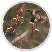 Hummingbird Flying To Red Yucca 3 In 3 Round Beach Towel
