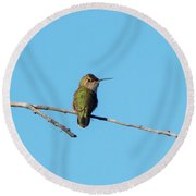 Round Beach Towel featuring the photograph Hummingbird by Lukas Miller