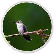 Hummingbird Parking It On A Tree Branch Round Beach Towel