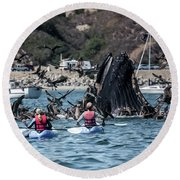 Humpbacks In Avila Harbor Round Beach Towel