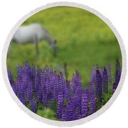 I Dreamed A Horse Among Lupine Round Beach Towel