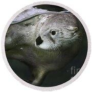 I Otter Be Swimming Round Beach Towel