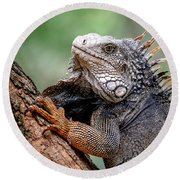 Iguana's Portrait Round Beach Towel