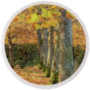 Round Beach Towel featuring the photograph In A Row by Bob Cournoyer