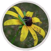 Round Beach Towel featuring the photograph In The Meadow by Dale Kincaid