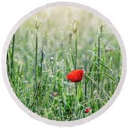 In The Mist Of The Morning Round Beach Towel