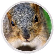 In Your Face Fox Squirrel Round Beach Towel