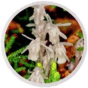 Indian Pipes On Club Moss Round Beach Towel