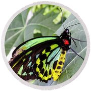 Insect Kaleidescope Round Beach Towel