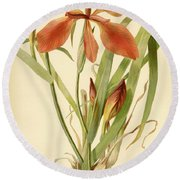 Iris Cuprea Copper Iris.  Round Beach Towel